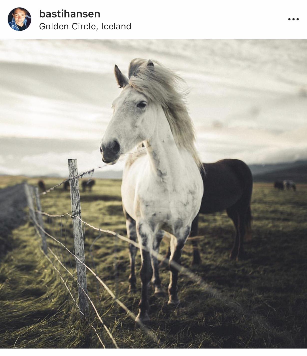 Icelandic Horses | @lisahomsy | check out the blogpost on www.lisahomy.com