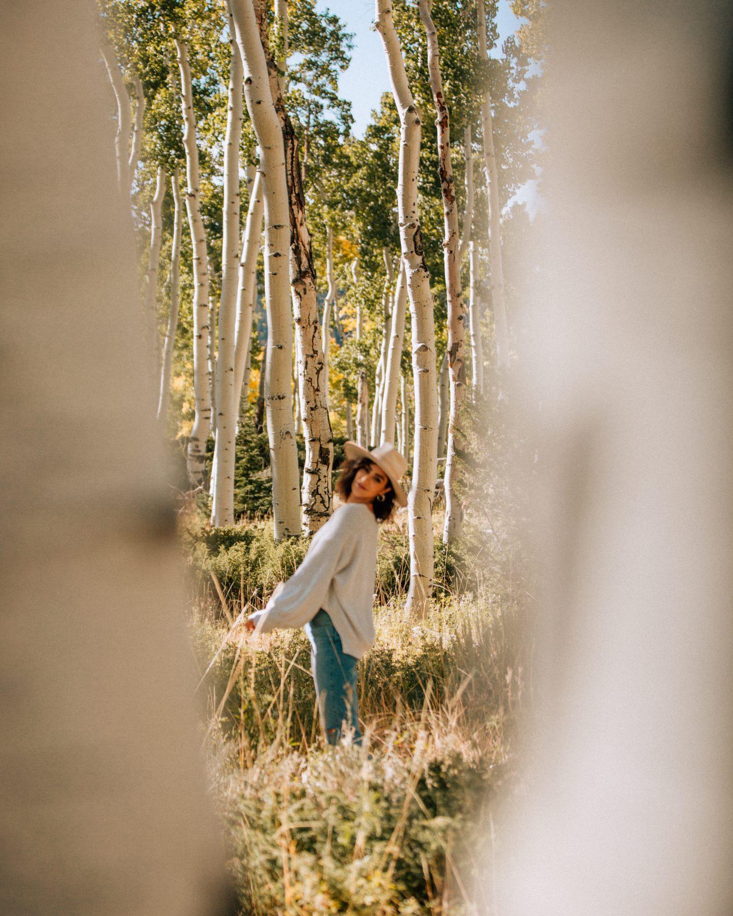 The Fishlake National Forest Pando aspen grove in Utah